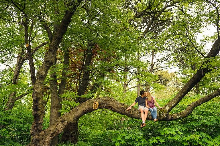 couple kissing in a tree at the Nichols arboretum in Ann Arbor, MI